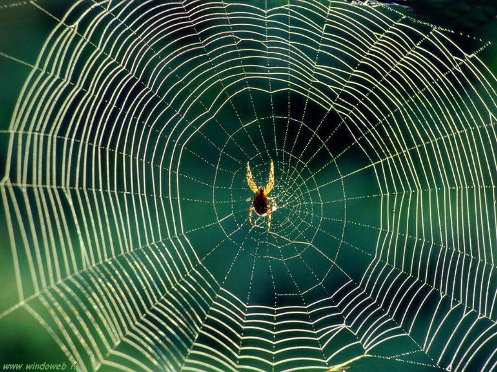 La rete coma una ragnatela