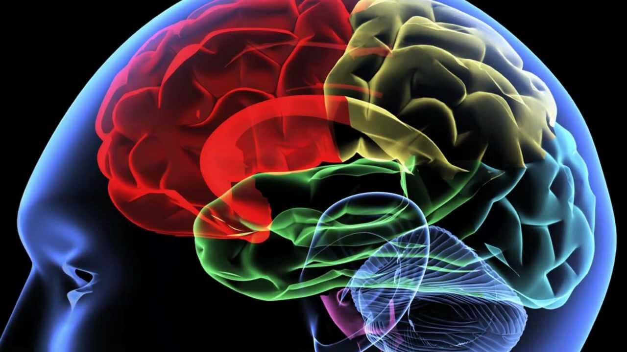 Reti biologiche e reti artificiali